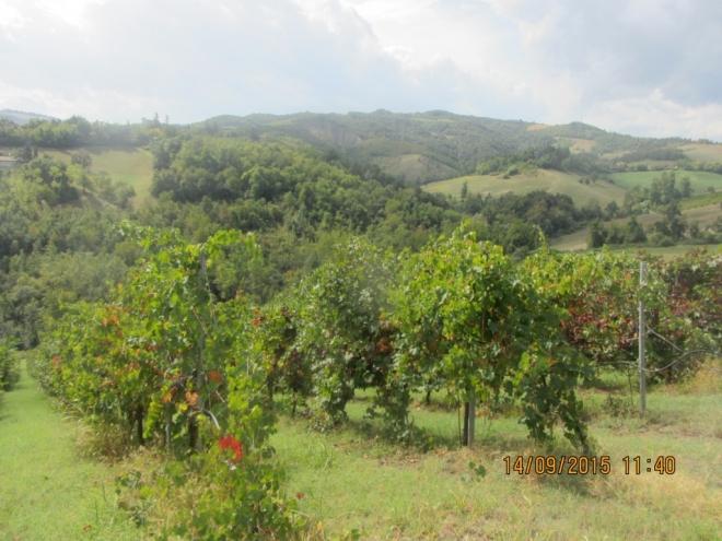Podere (casa + Terreno) in vendita Albinea
