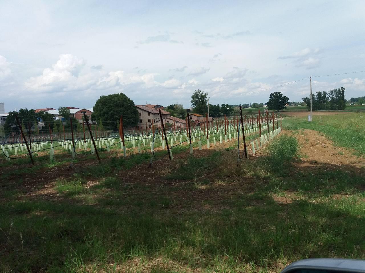 Podere (casa + Terreno) in vendita Scandiano