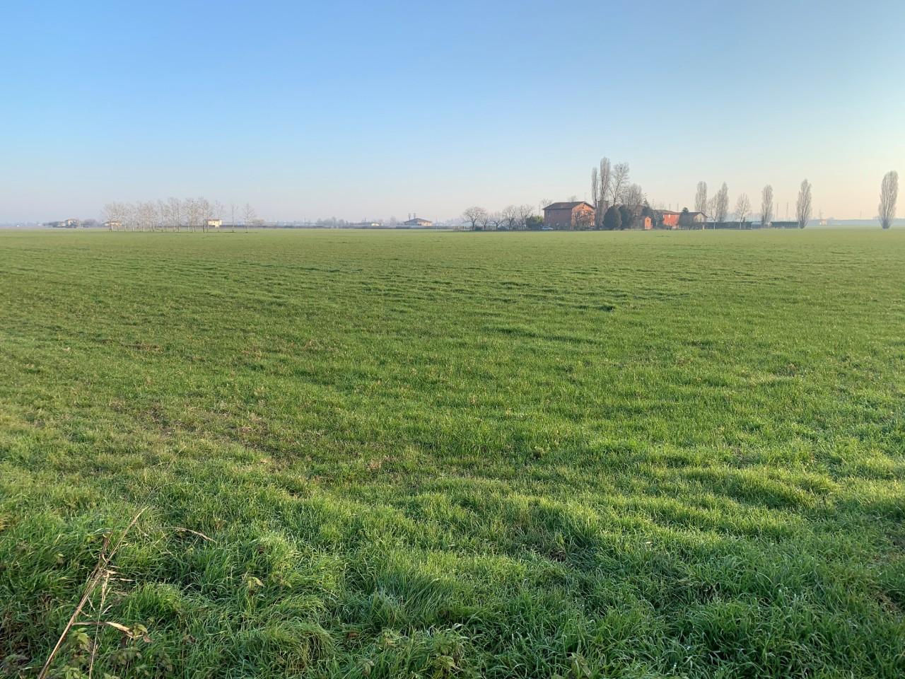 Terreno Agricolo in vendita Budrio