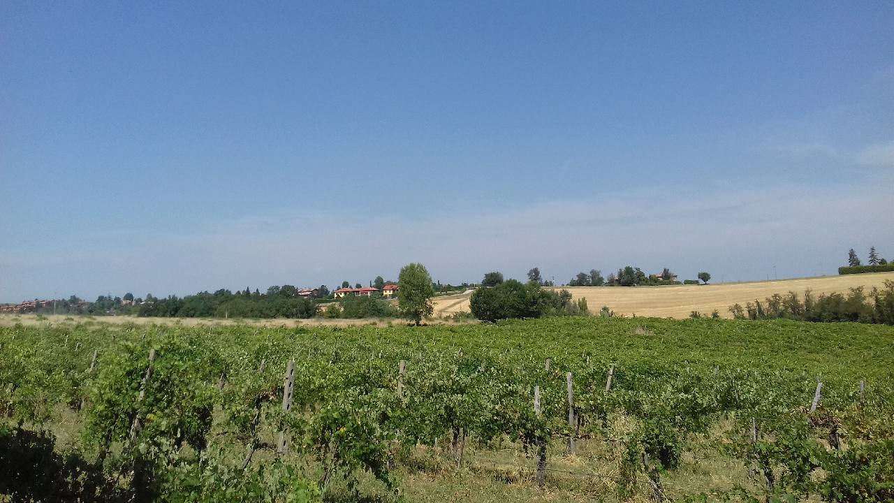 Terreno Agricolo in vendita Molinella